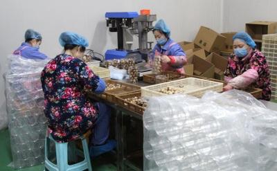 小蒜头做成大产业  金乡大蒜实现全产业链发展格局
