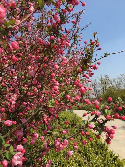 春暖花開 濟寧太白湖景區迎踏青小高峰