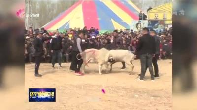 兖州:斗羊大赛精彩上演