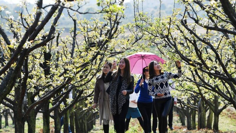 攻略|最强版济宁春季赏花路线,送你整个春天!