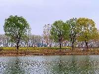 微山湖的春天来了!