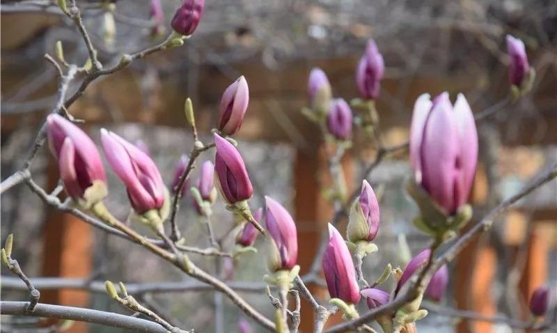 這個周末,必威betway市博物館與您相約 共賞詩意春天
