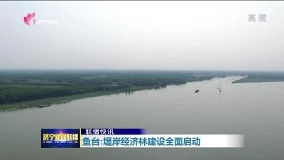 鱼台:堤岸经济林建设全面启动