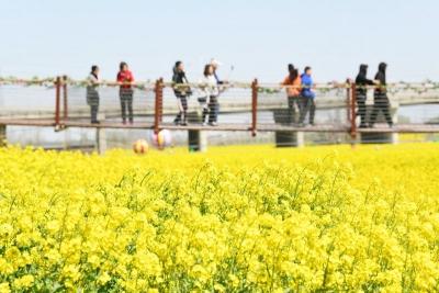 邀你共赴春天的约会 兖州牛楼首届油菜花节开幕