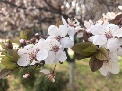 春分到  花儿俏 让我们一起为春游打call (图集)