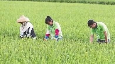 """山东省种子条例6月起施行 让劣种无处""""扎根"""""""