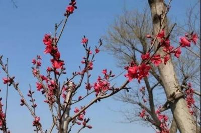 三月赏花四月放鱼,太白湖精彩不断
