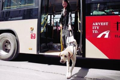无障碍车位、导盲犬上公交……山东这项新规全说清了