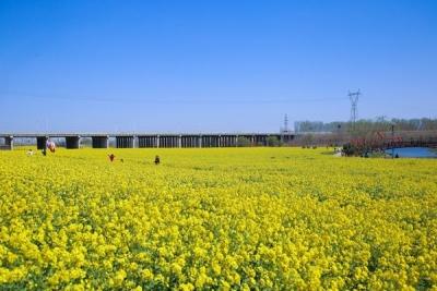 乡村旅游直通车开起来了 带你去兖州牛楼看万亩油菜花