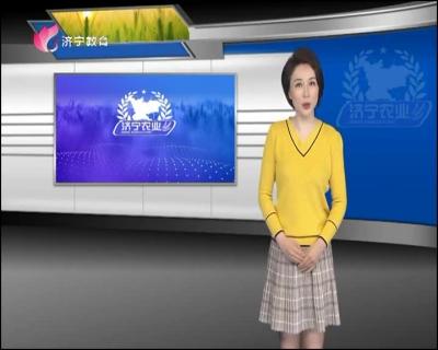 济宁农业 — 20190426