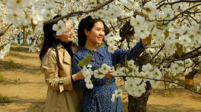 清明小长假丨@济宁人,准备好去哪里踏春了吗?