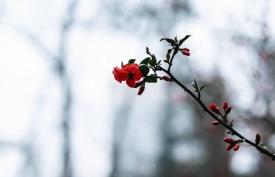 《花落花开》