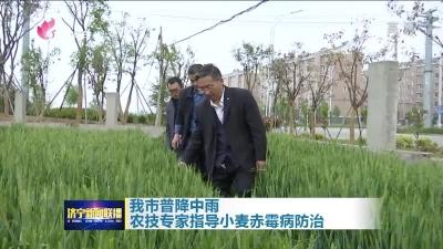 我市普降中雨 农技专家指导小麦赤霉病防治