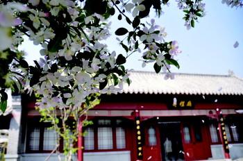 春风十里,不及中都文旅之美 汶上文化旅游节等你来!