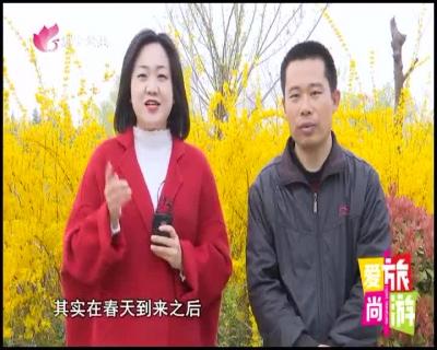 愛尚旅游 — 20190404