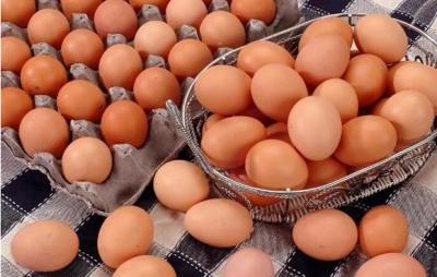 """雞蛋也有""""身份證""""了!濟寧實施鮮雞蛋""""雙證制"""""""