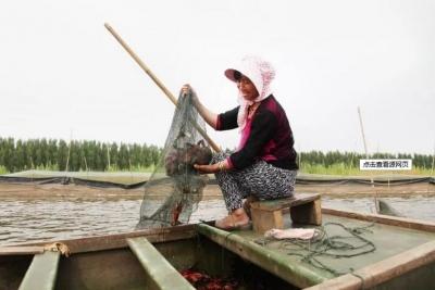 鄉村振興|小龍蝦做成大產業 微山湖小龍蝦走俏市場探秘
