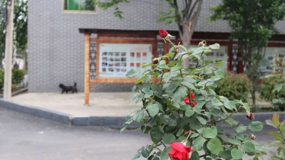 """兖州区颜店镇:""""绿色指挥棒""""奏响跨越发展交响乐"""