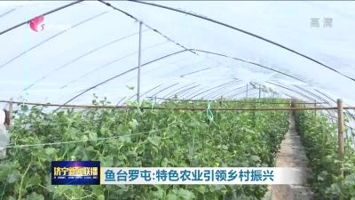 鱼台罗屯:特色农业引领乡村振兴