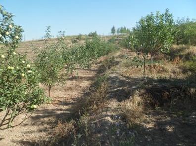 精準扶貧|荒山複綠變果園 村民脫貧致富奔小康