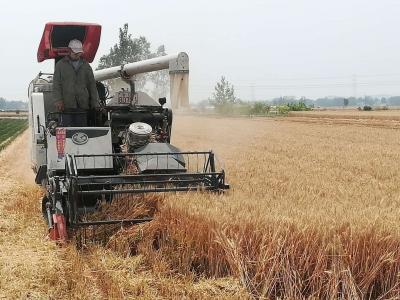 金乡30万亩小麦集中收获 确保颗粒归仓