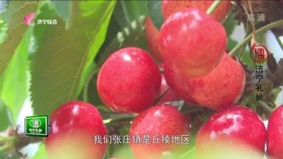 济宁农业 — 20190604
