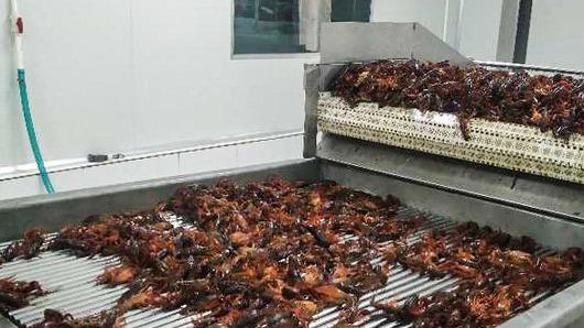 鱼台速冻即食小龙虾,-196℃液氮冷冻保营养