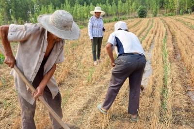 曲阜吳村鎮:全力以赴抗大旱 夏種夏管奪豐收