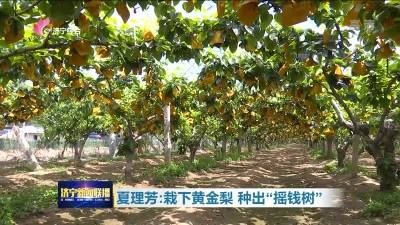 """【领航】夏理芳:栽下黄金梨  种出""""摇钱树"""""""