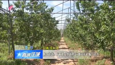 任城:唐口街道:发展农业特色产业 激活乡村振兴活力
