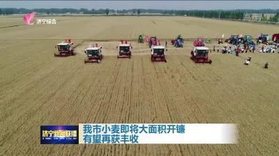 我市小麥即將大面積開鐮 有望再獲豐收