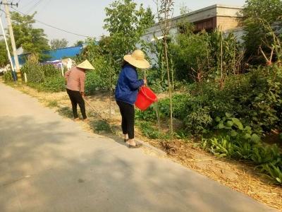 """酷暑难挡 金乡县司马镇为绿化苗木浇水""""止渴"""""""