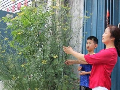 """真稀罕!梁山一棵小茴香长成""""树"""" 高达两米三(图)"""