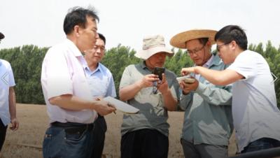 丰收已成定局!济宁夏收近尾声 小麦单产创新高