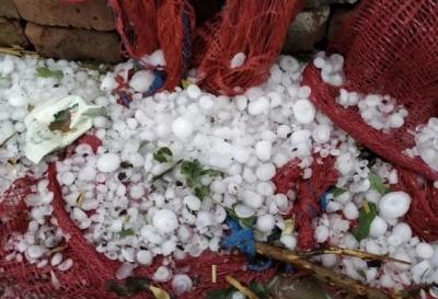冰雹來襲!面對大面積災情,金鄉上下齊心協力救災減損