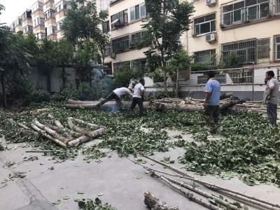 再也不用提心吊胆了!东门社区砍伐危树还居民安心