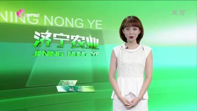 济宁农业 — 20190726