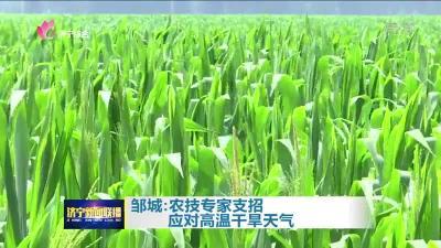 鄒城:農技專家支招 應對高溫干旱天氣