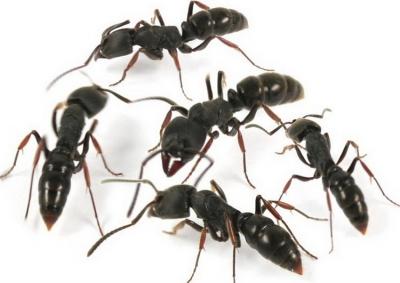 """""""偷渡""""蚂蚁竟是宠物!但不是你想养就能养的…"""