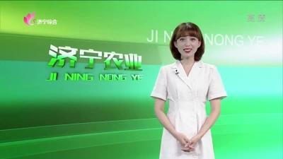 济宁农业 — 20190730