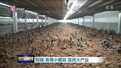 乡村振兴看邹城!看小巧的菌菇是如何走失富民之路的?