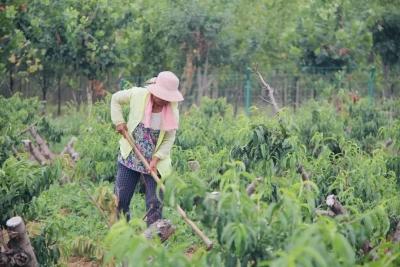 山东将在6县市试点农业生产社会化服务规范化建设