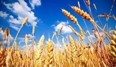 有关中国企业进行新的美国农产品采购