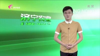 济宁农业 — 20190709