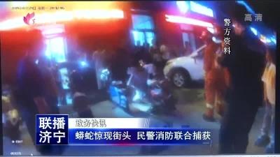 蟒蛇惊现街头 民警消防联合捕获
