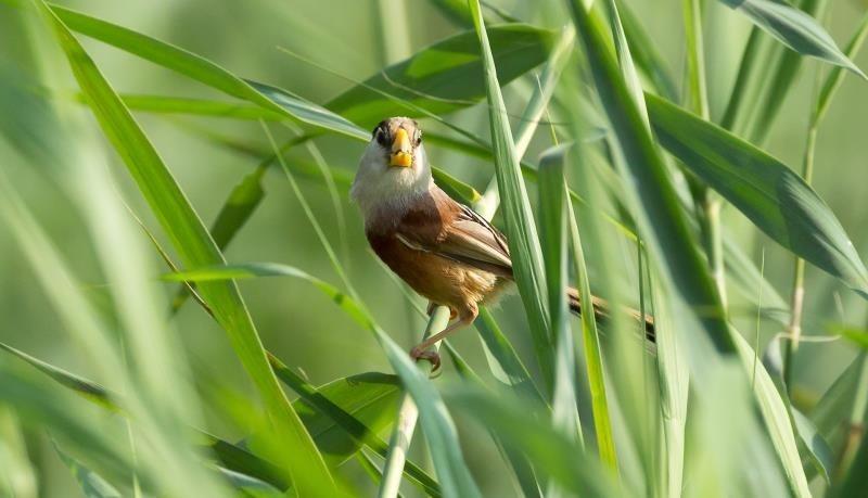 """从""""迁徙""""到""""定居"""" 梁山提升生态功能 让鸟儿安居"""