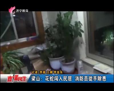 梁山:花蛇闯入民居   消防员徒手除患