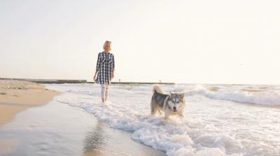《济宁市养犬管理条例》9月实施,不文明养犬行为将受处罚