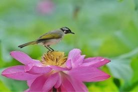 《鸟儿洼的夏天》