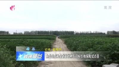 鱼台县成为全省首批棉花目标价格保险试点县